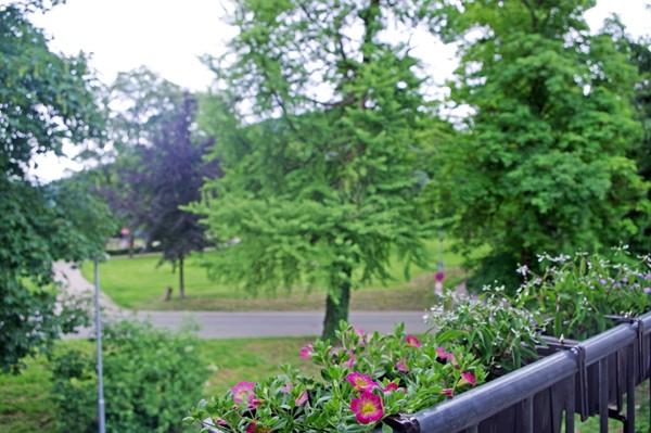 Fewo am Menzer Park Aussicht ins Grüne